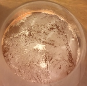 Pellicle on rose capture